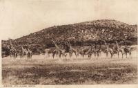Giraffe, Athi Plains, Kenya