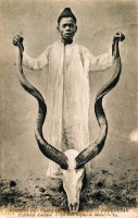 L Antilope Kouddou - Un beau trophée de chasse