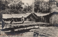 Drying Beans on Bamboo Tables