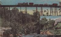 La ferrovia dell Uganda invade le vergine foreste del Kenya
