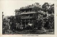 From Treetops Nyeri