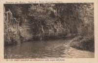 Le radici scendono ad abbeverarsi nelle acque del fiume