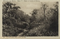 La carovana entra nella foresta