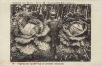 Vegetazione equatoriale di prodotti nostranei