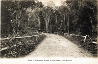Road to Clairmont House in the forest, near Nairobi