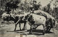 Kikuyu Transport