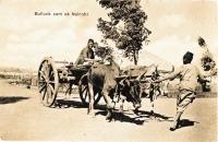 Bullock cart at Nairobi