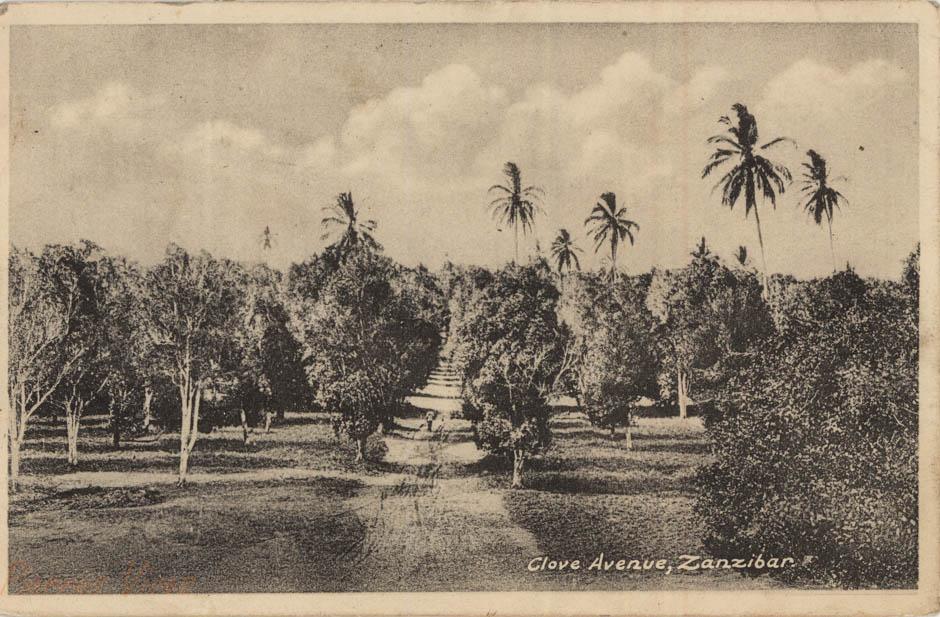 Clove Avenue, Zanzibar