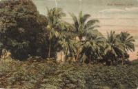 Moco Plantation, Z bar
