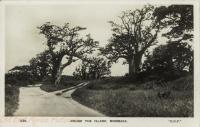 Round the Island, Mombasa
