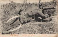 A Fine Elephant