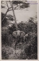 nil (Elephants)