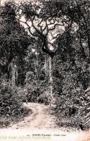 KISUBI - Under trees