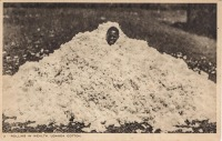 Rolling in Wealth. Uganda Cotton