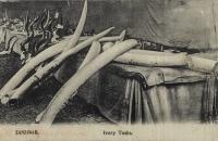 Ivory Tusks
