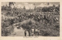 The Mwera River, Zanzibar