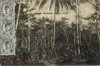 Vanilla Plantation, Dunga, Z bar