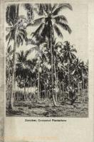Cocoanut Plantations