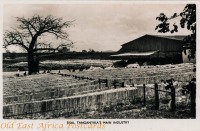 Sisal Tanganyika s Main Industry