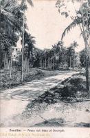 Areca nut trees at Doongah