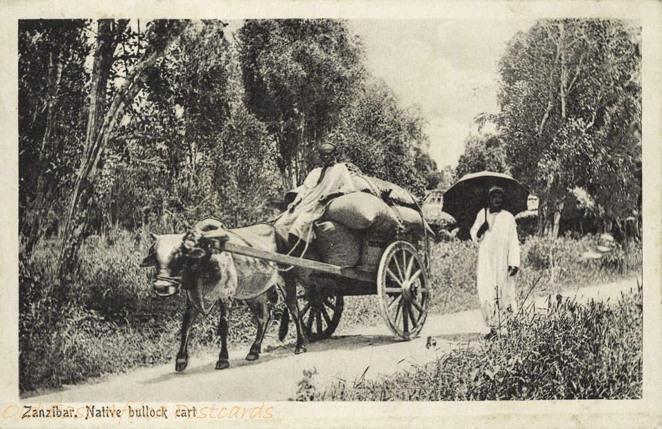 Zanzibar, Native bullock cart