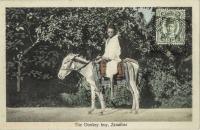 The Donkey Boy